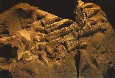 colezione gutierrez- columbia 130 milioni anni