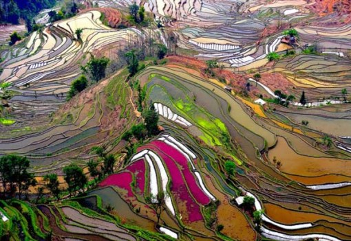 elect- Terrace-Rice-Fields-China
