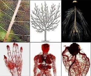 omul si pomul