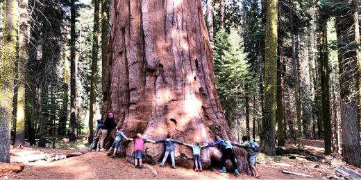 sequoia-hora oameni
