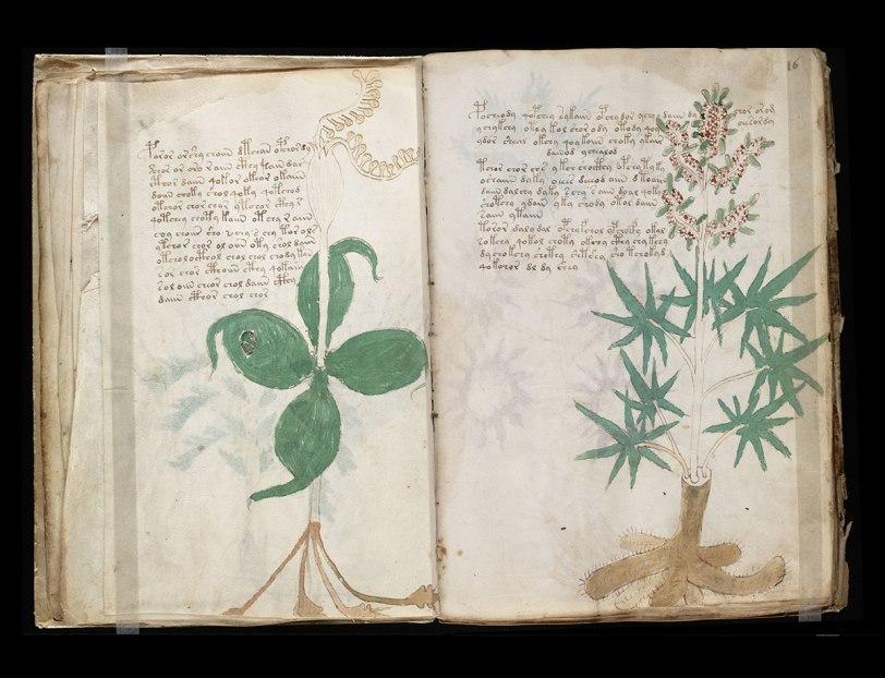 voinic plante 2