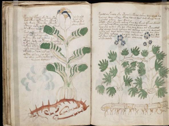 voinic plante 3