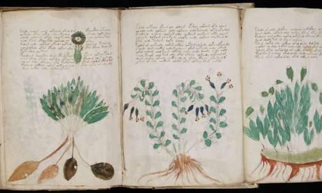 voinic plante 4
