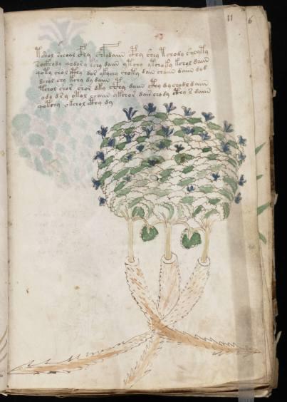 voinic plante 8
