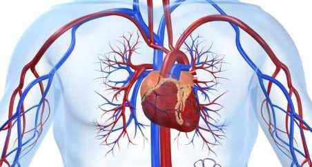 ap carduio vascular
