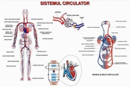 ap circulator 2